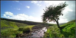treebystream